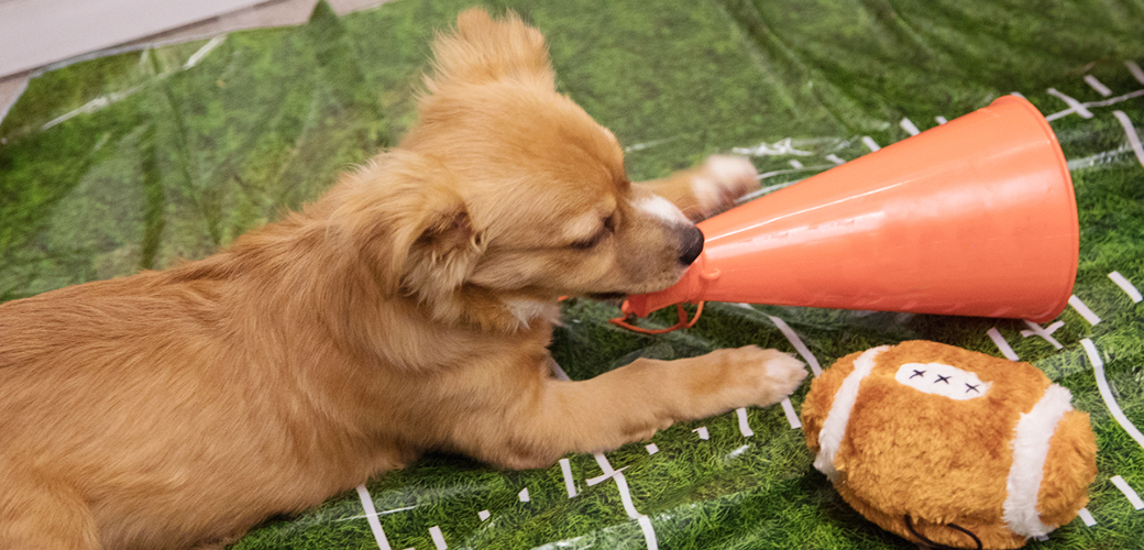 puppy with a toy plush football and megaphone