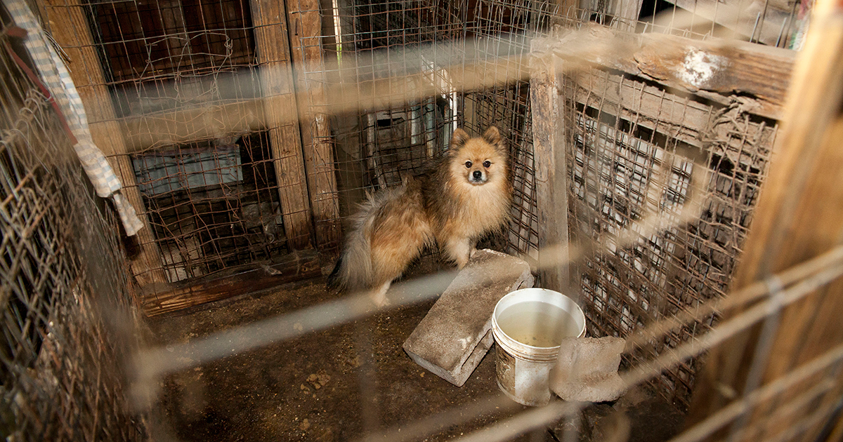 Aspca Petitions U S Government For Stronger Puppy Mill