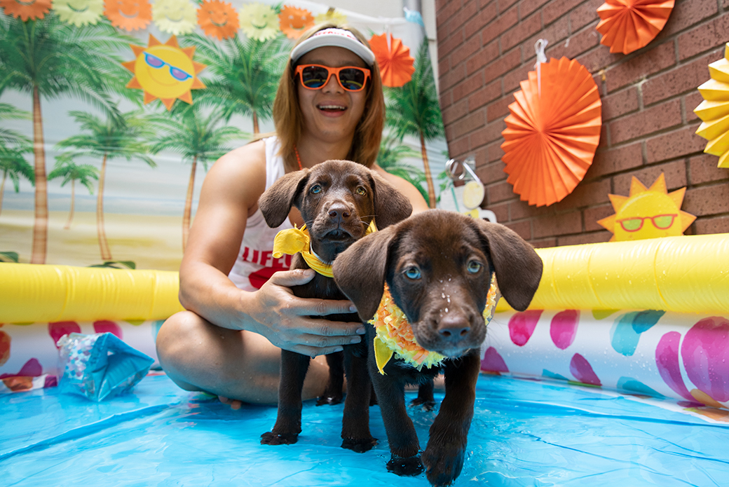 two puppies with a life guard