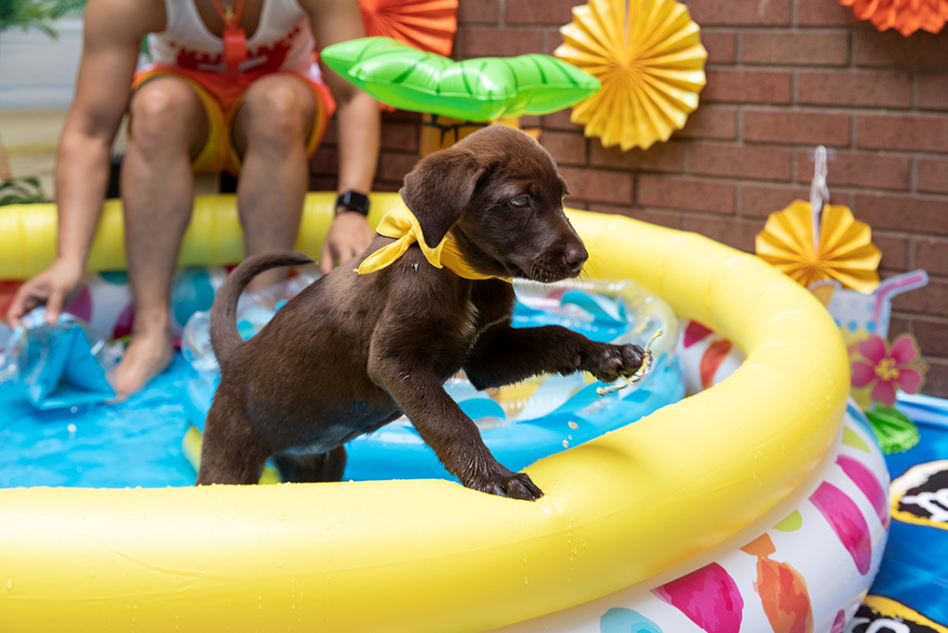 a puppy splashing water out of the pool