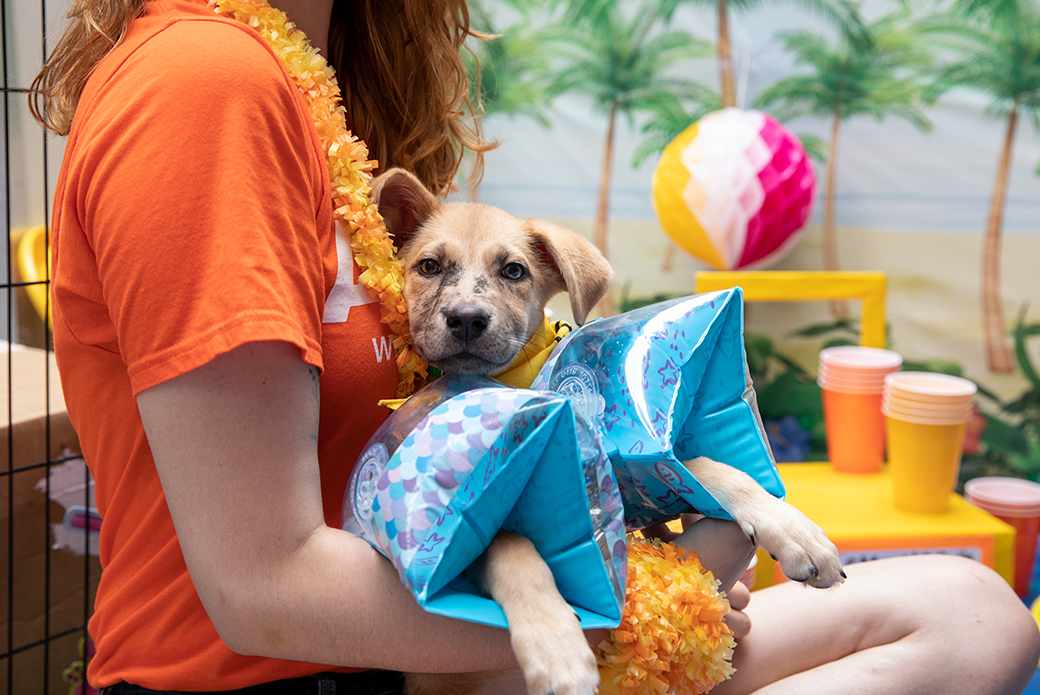a puppy wearing floaties being held in a woman's lap