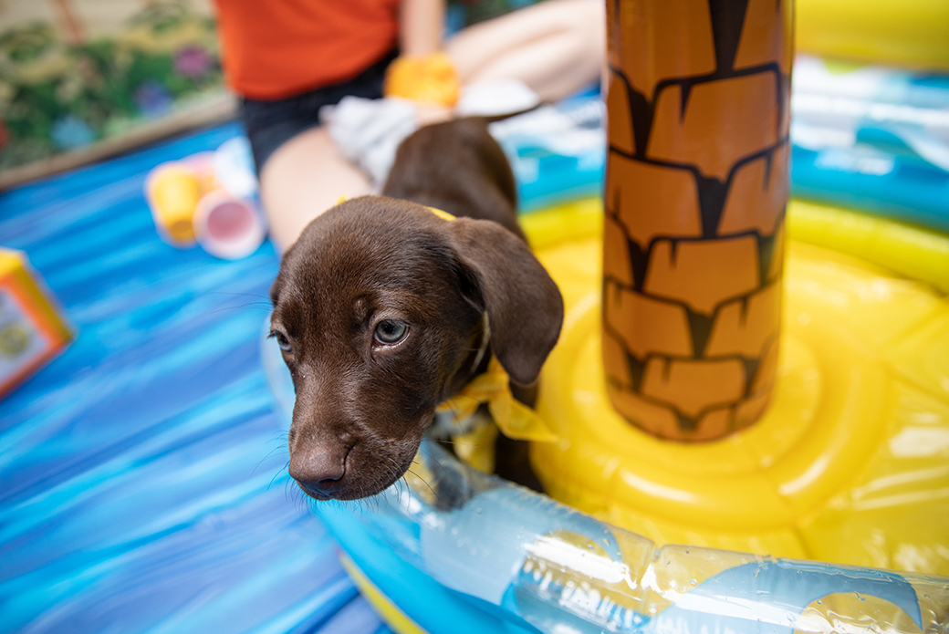 a puppy in the pool
