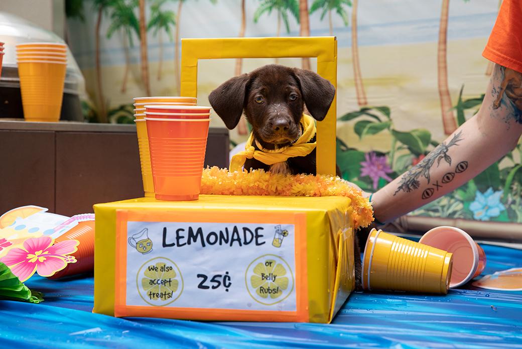 a puppy selling lemonade