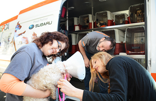 Volunteers load the dogs onto the transport vehicle.