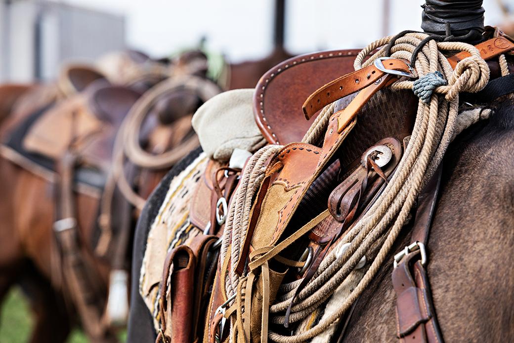 western saddles on horses