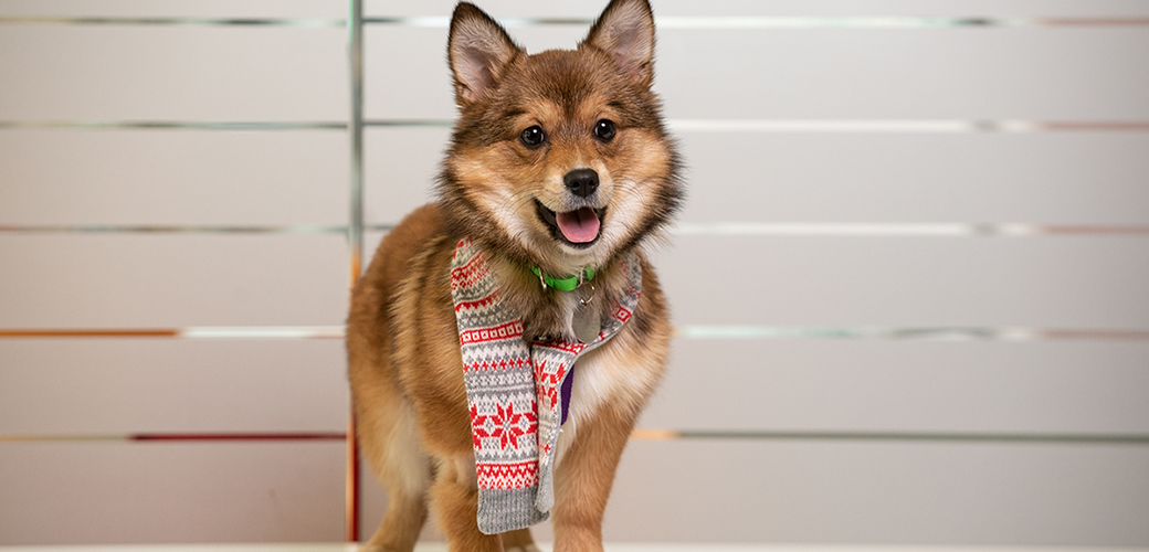 happy dog in a scarf