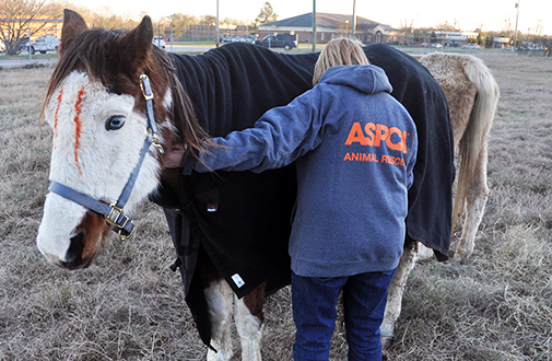 Breaking News: ASPCA Steps in to Provide Emergency Assistance for South Carolina Horses