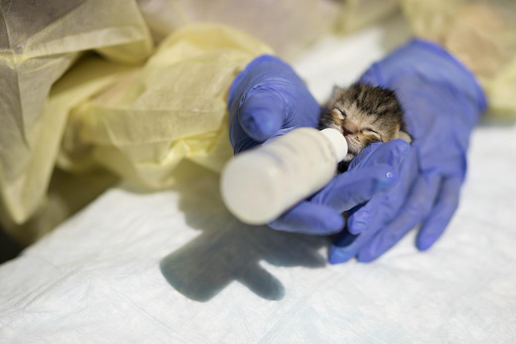 a neonate specialist feeding a kitten