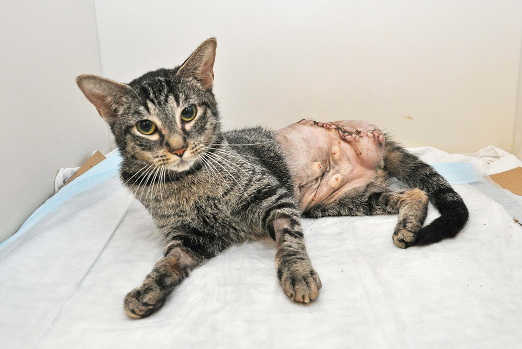 Shamrock at the ASPCA Animal Hospital
