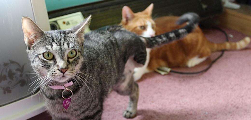 Shamrock's Lucky Day: Kitten Survives Shocking Wound, Finds Loving Home