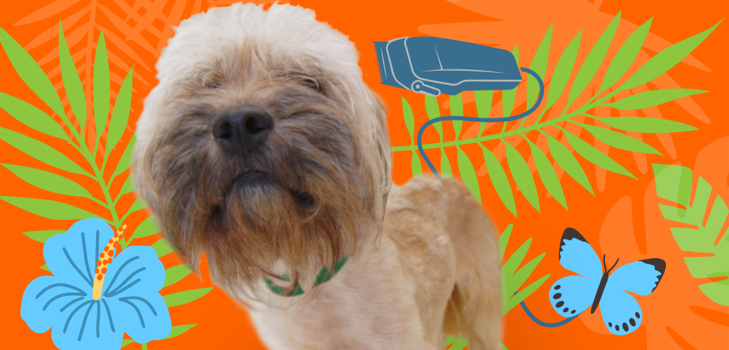 Its Hot Out Should You Shave Your Pet Aspca