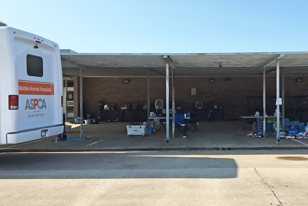 The ASPCA's temporary shelter in Sour Lake, Texas