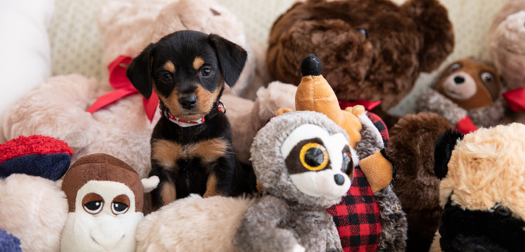 a puppy with stuffed animals