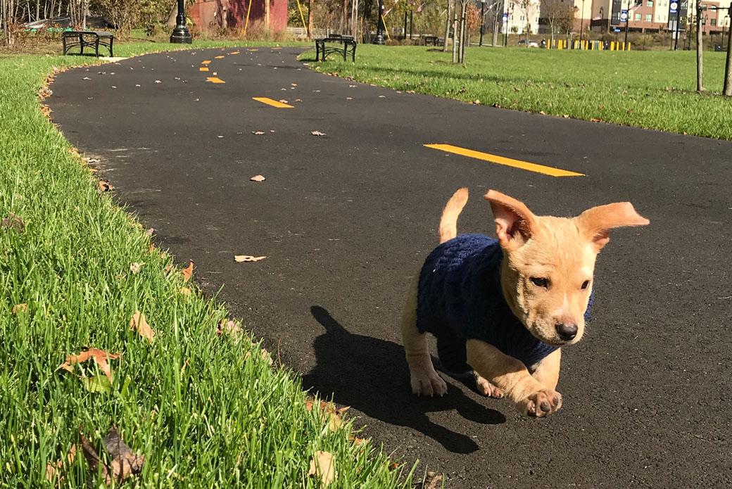 Croix running through a park