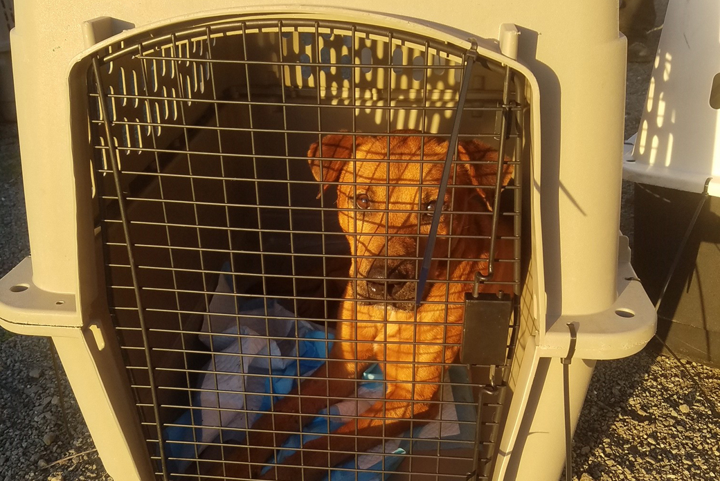 A dog in a crate waiting to be transported