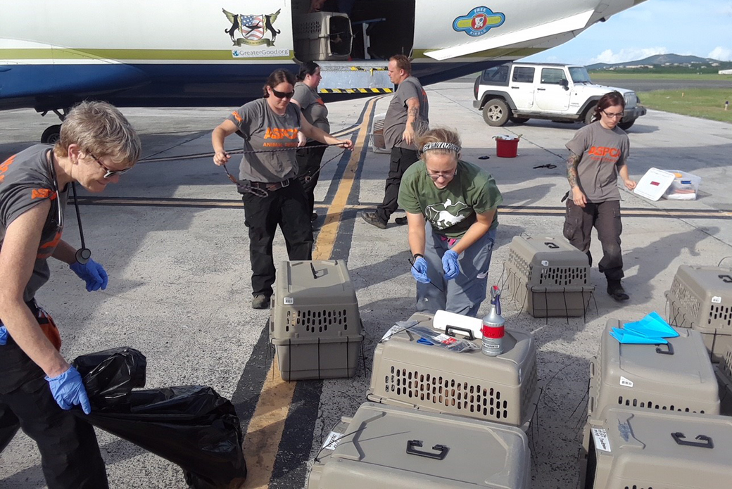 ASPCA volunteers loading the carriers onto the plane