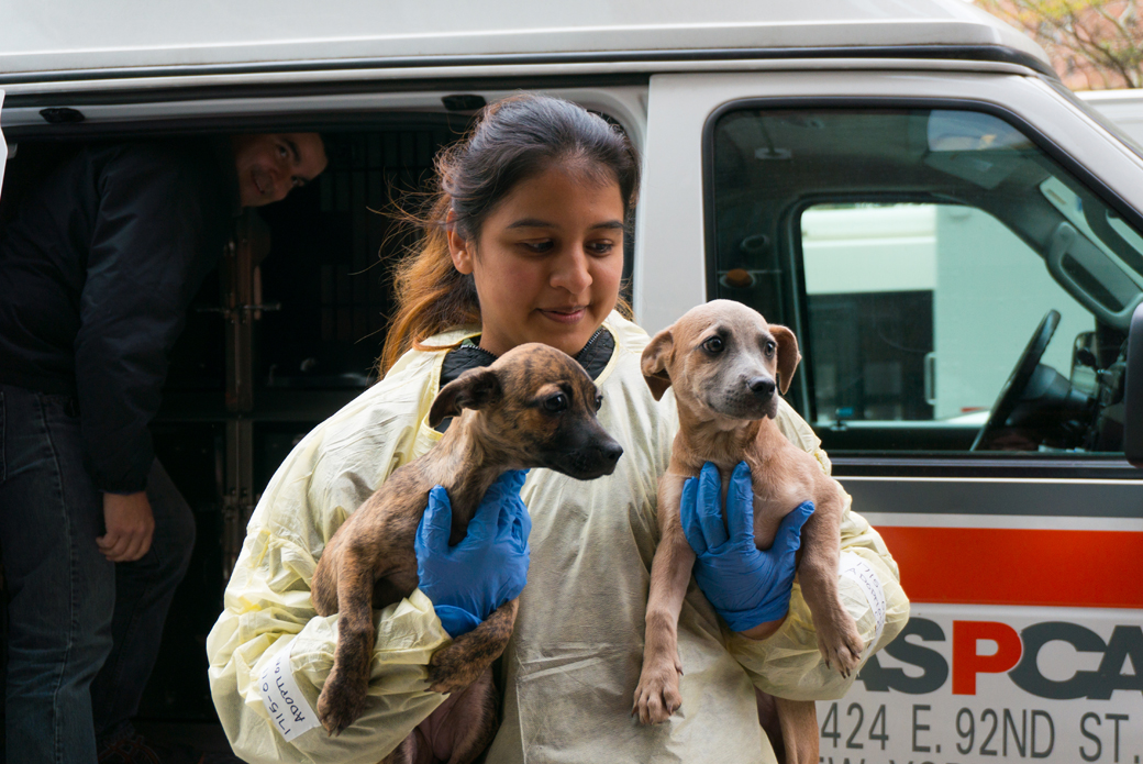 an adoption center worker carrying two dogs