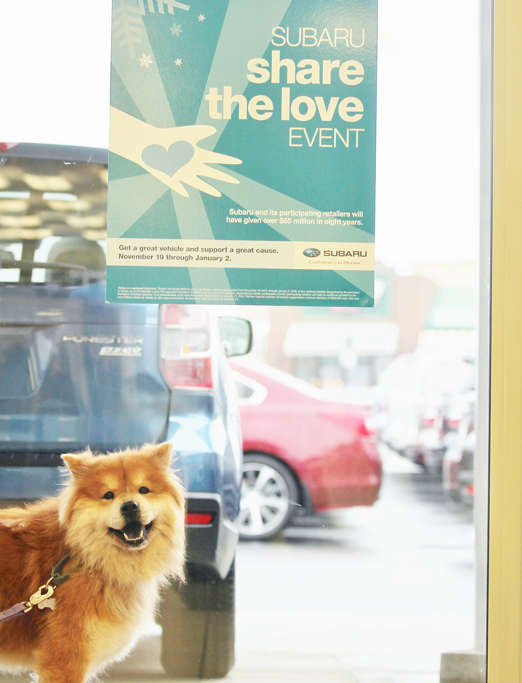 Happy pup at Subaru Share the Love Event