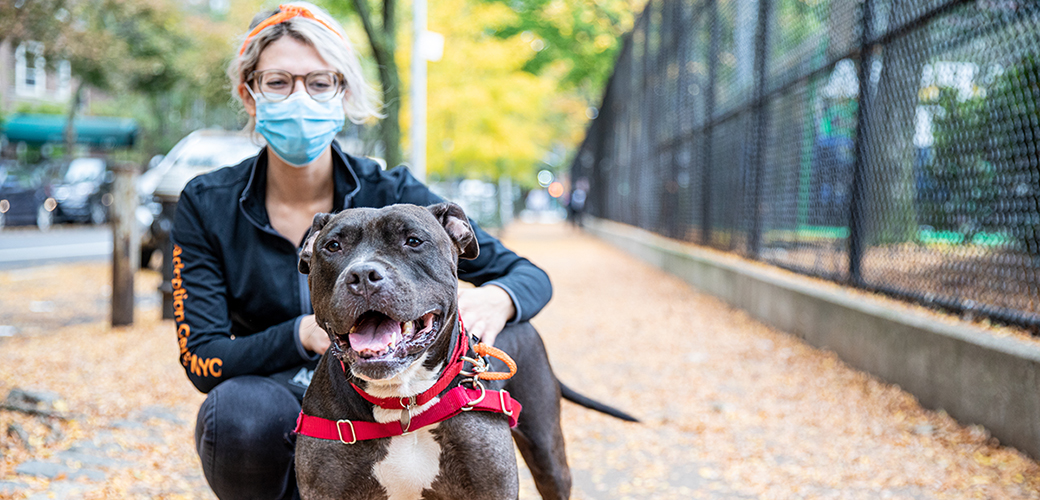 adoption center staff walking a dog