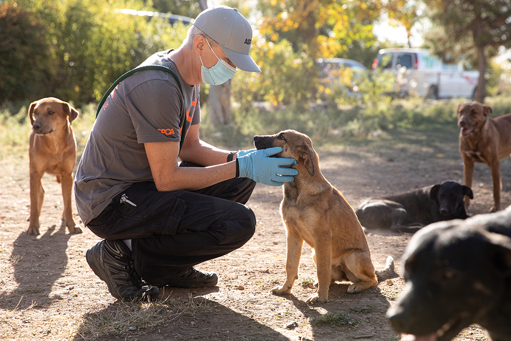 ASPCA responder examining a dog on site