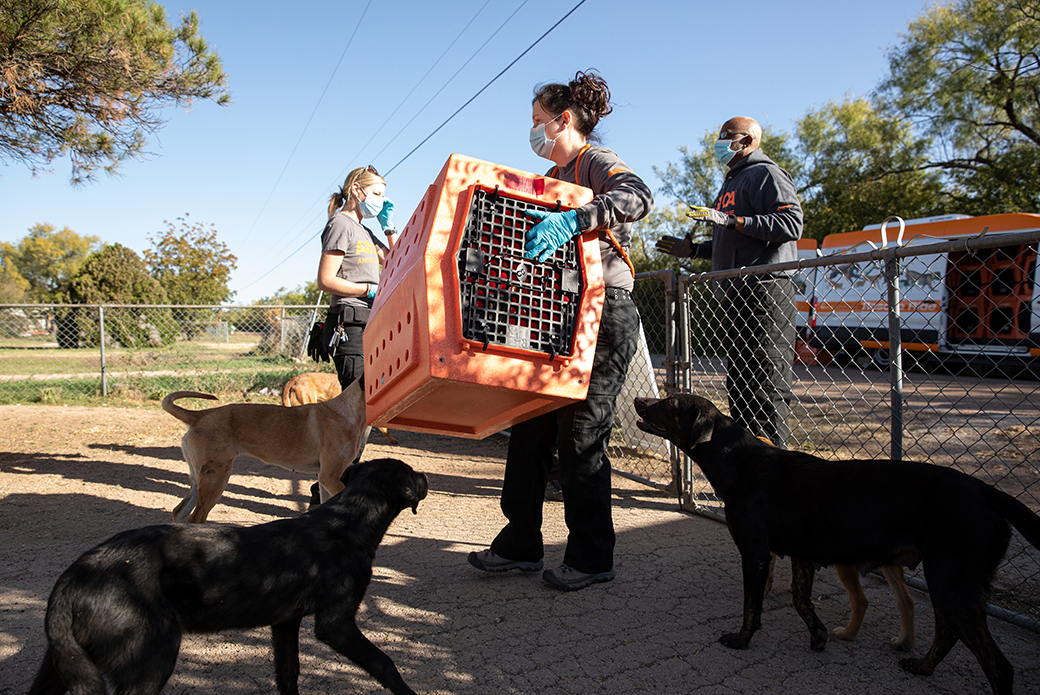 ASPCA responder carrying a dog carrier