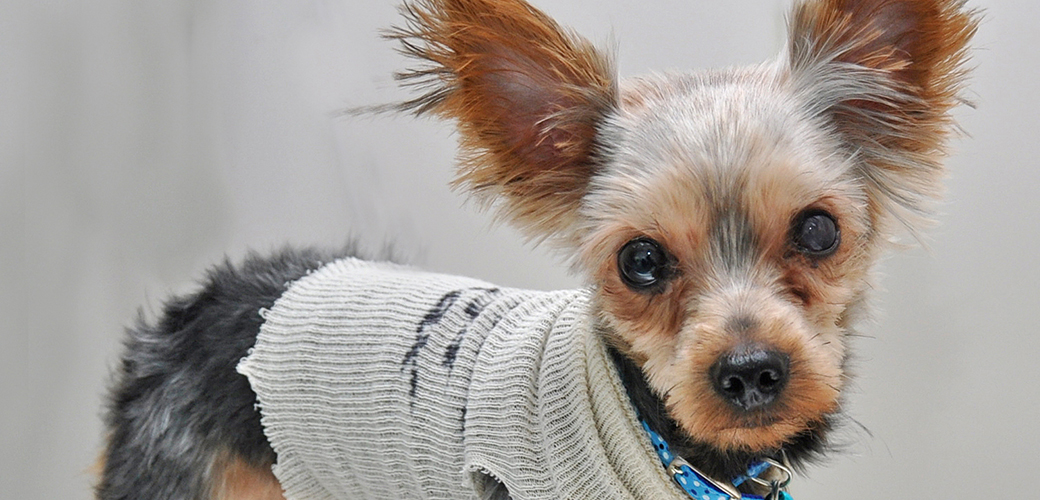 Thrown Out Like Trash: Tiny Pup Left Nearly Blind After Garbage Chute Drop