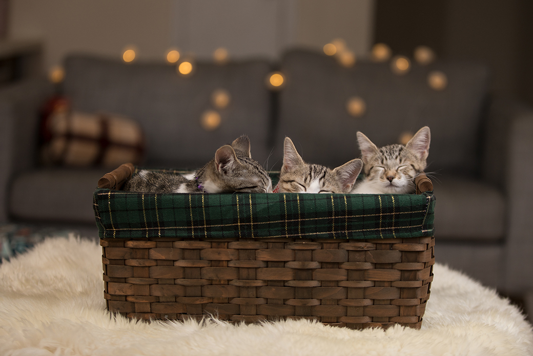 kittens resting in a basket