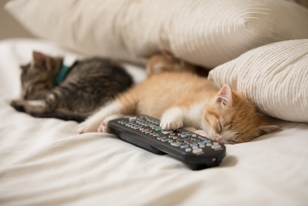 kittens sleeping with a remote