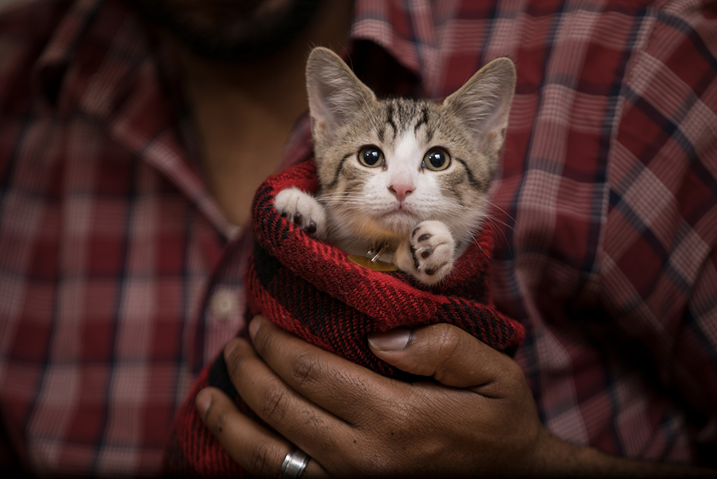 a kitten wrapped up