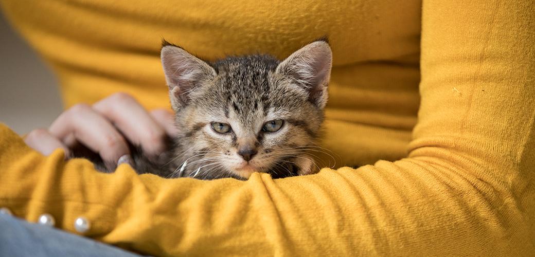 a kitten resting in a woman's lap