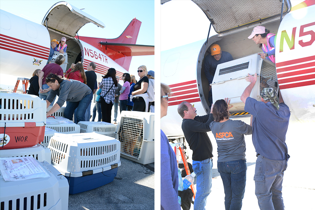 Volunteers moving animals off the plane