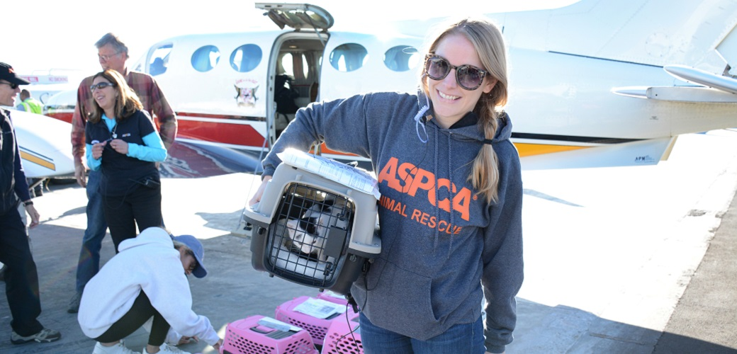 ASPCA volunteer transfers a cat in a carrier