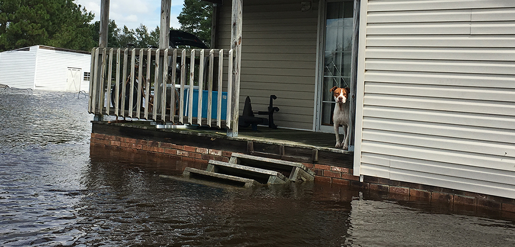 A dog stranded in a flood
