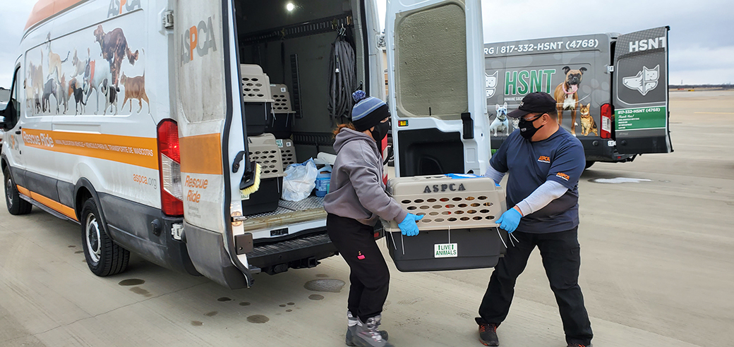 aspca responders moving rescued animals out of a transport truck