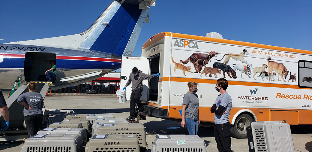 rescued animals being readied load onto a wings of rescue plane