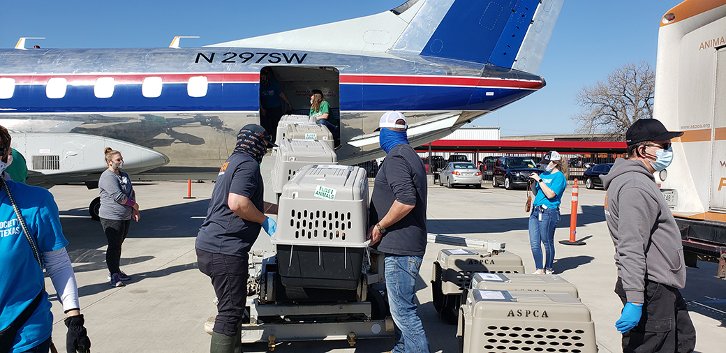 Loading rescued animals onto a plane