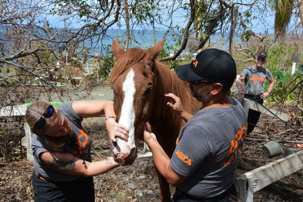 a horse being examined by rescuers