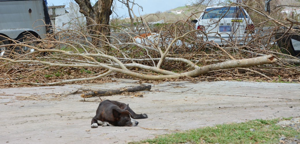 a dog resting near debris after the storm