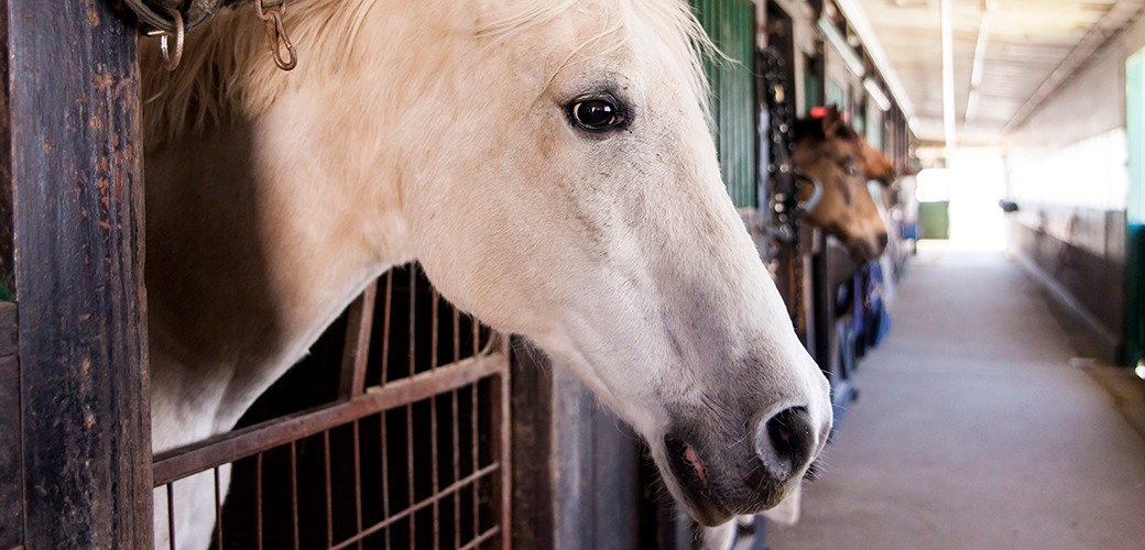 U.S. Horses Deserve Lasting Protection