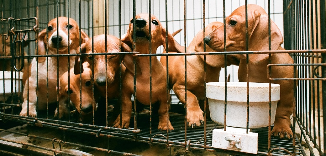 dogs in a rusty cage