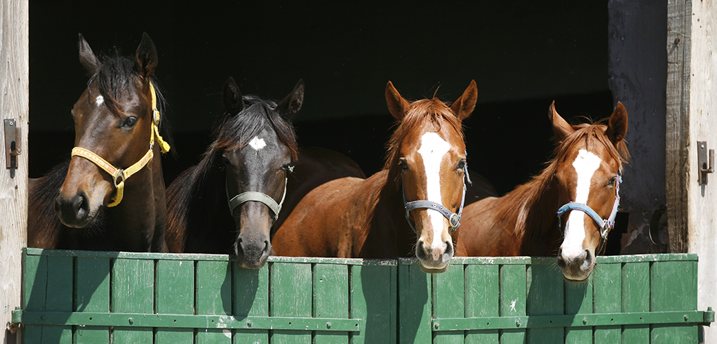 Victory: House Committee Votes to Protect Horses from Slaughter