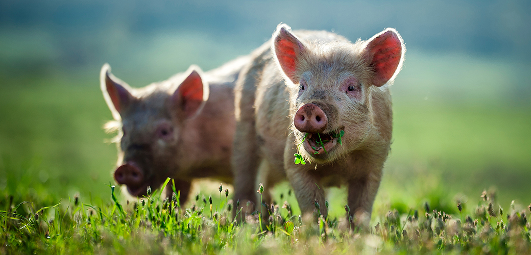 Victory! Gov. McCrory Vetoes North Carolina's Dangerous Ag-Gag Bill