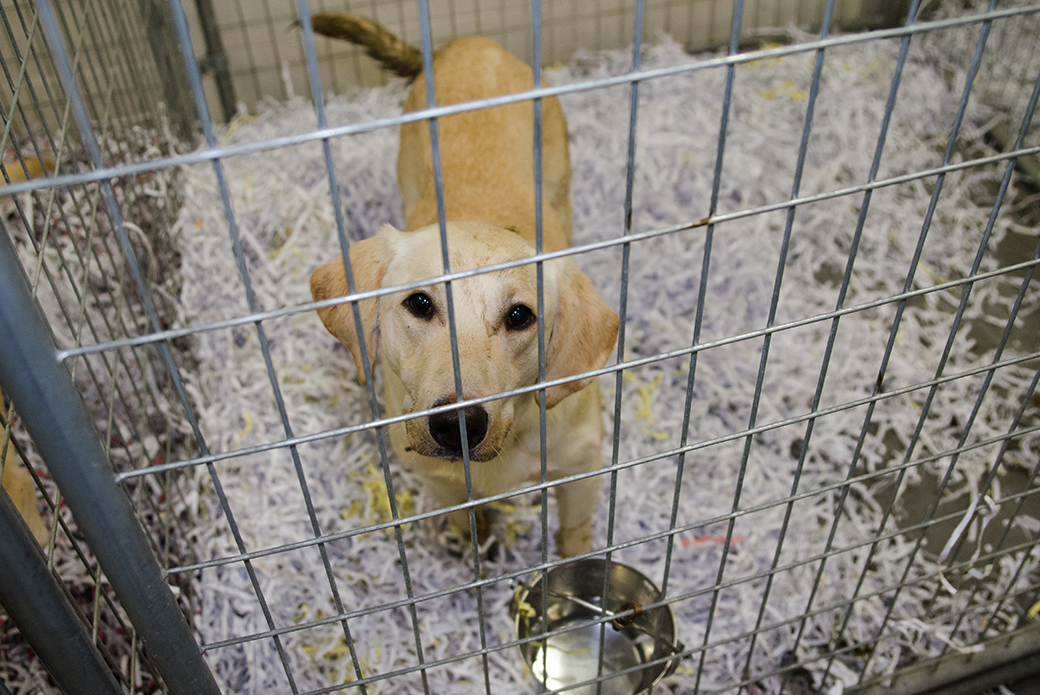 EXCLUSIVE: View Photos from Our Yellow Lab Rescue | ASPCA
