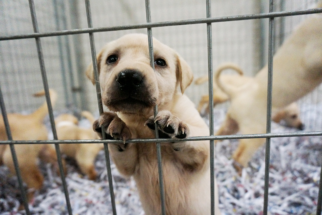 Exclusive View Photos From Our Yellow Lab Rescue Aspca