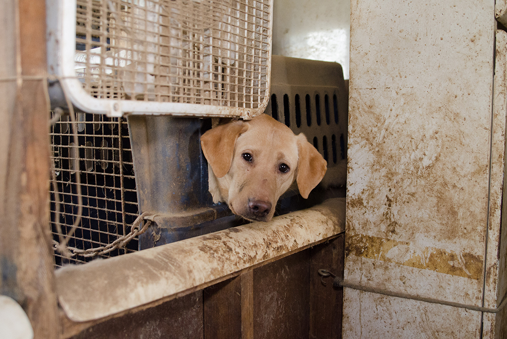 The dogs were discovered living indoors in small, filthy travel crates, with no access to food or water.
