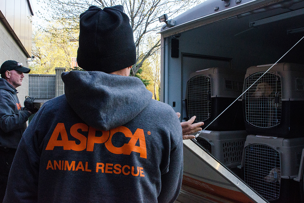 The dogs were loaded safely into our transport vehicle and taken to a secure shelter.