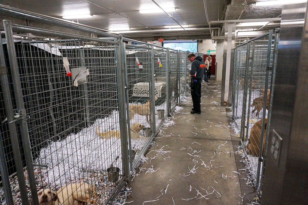 At the shelter, the dogs received clean bedding and spacious enclosures—many for what is likely the first time in their life.