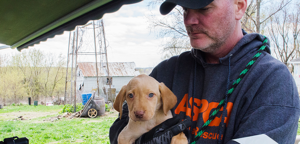 EXCLUSIVE: View Photos from Our Yellow Lab Rescue