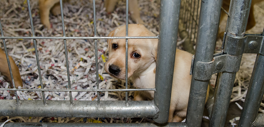 EXCLUSIVE: View Photos from Our Yellow Lab Rescue   ASPCA