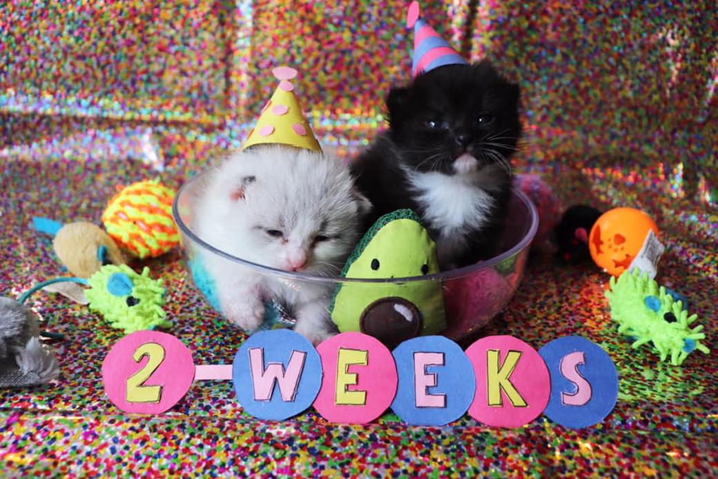 kittens Blackberry and Blueberry